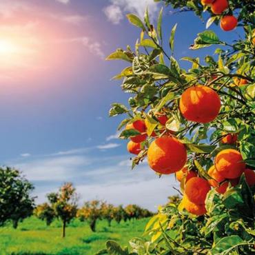 La route des Orangers